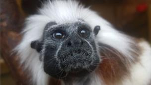 Taken by Isaac West, aged 10, at the Cotswold Wildlife Park