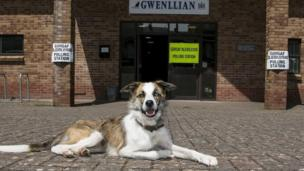 Gregory the dog outside Kidwelly polling station