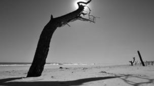 شجرة ميتة
