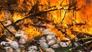 ซากตัวนิ่มถูกเผาทำลาย