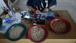 บนโต๊ะรับซื้อขายข้าวเปลือกและข้าวสาร
