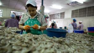 คนงานพม่าเข้ามาทำงานปอกเปลือกกุ้ง ที่โรงงานแห่งหนึ่งใน ต.มหาชัย จ. สมุทรสาคร