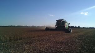 Cosechadora en un cultivo de soja