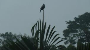 Un ave sobre una rama