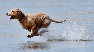 Dog running on St Aubins Beach in St Helier