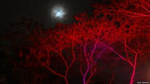 Moon and a red tree