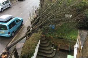 Downed tree during Storm Katie in Twickenham, London. Credit: Laurence Isherwood