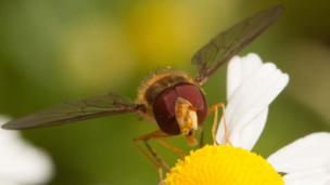Close-up on insect feeding on flower