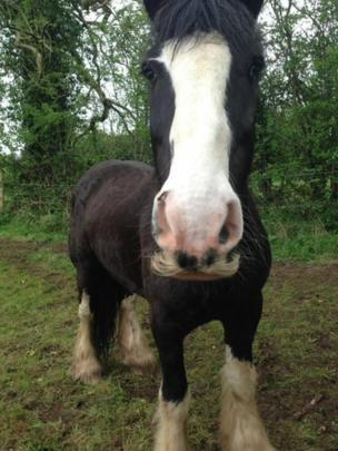 A horse with a cut on its nose