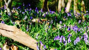 Lovely walk in Bagley woods with the bluebells