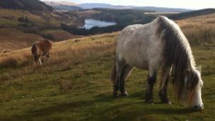 Ponies on the Brecon Beacons, by David Griffiths