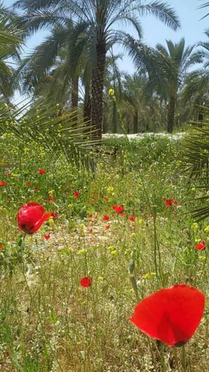 ابی از خشت در استان فارس