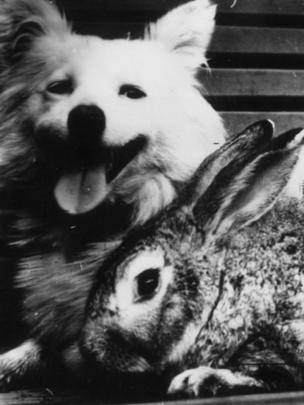 cachorro e coelho