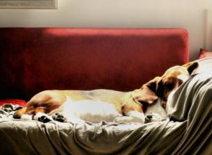 Un perro durmiendo en un sofá