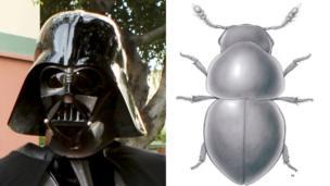 Vader Beetle