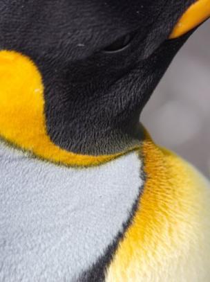 Pinguim-re