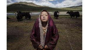 A young Tibetan Buddhist novice monk stands with his yak herd at the family's nomadic summer grazing area on the Tibetan Plateau