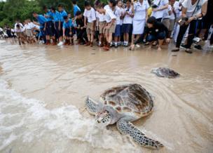 ภายในงาน มีข้าราชการ ประชาชน และนักเรียนร่วมปล่อยเต่าทะเลคืนสู่ธรรมชาติ