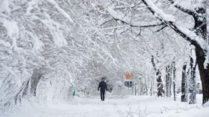 An Afghan man walks along a path under snow-laden trees in Kabul