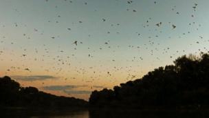 Mayflies on Tisza River near Tiszainoka in Hungary, 16 Jun 17