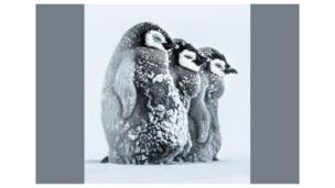 penguin di antartika