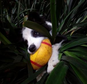 Perro con una pelota amarilla en la boca