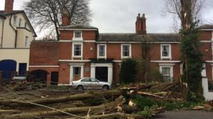Trees brought down in Edgbaston