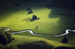 A horse in the middle of a green field.