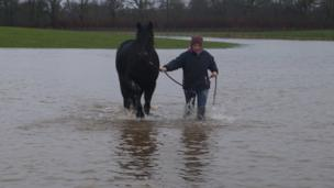 Horse led through a flooded field