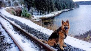 Blu the dog on the Brecon railway