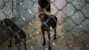 Dogs look out from inside a pen at the newly opened Pyongyang Central Zoo in Pyongyang, North Korea, Tuesday, Aug. 23, 2016.