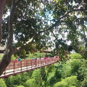 Caminata sobre un puente colgante