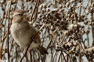 A bird sits amongst dried seeds