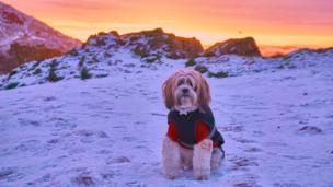 Eddie the Tibetan terrier