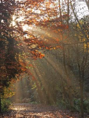 Sunlight streams through trees