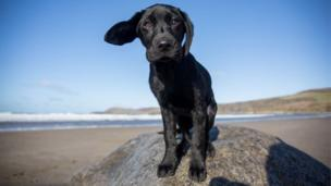 Barnaby the dog at Whitesands Beach, Pembrokeshire