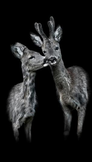 Der Kuss by Claudio Gotsch