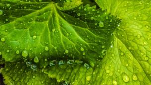 Anthony Morris from Farmoor captured the beauty of raindrops during this week's downpours
