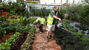 Gardeners prepare a display of vegetables