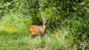 Deer spotted near Didcot.