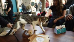 One of the classics! Cat cafes are now all over the world, and who wouldn't want to eat while surrounded by some cuddly kittys... it's paw-some!