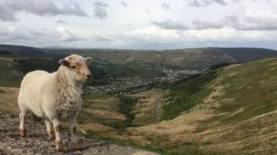 Sheep at Bwlch, Rhondda Cynon Taff, by Annette Green