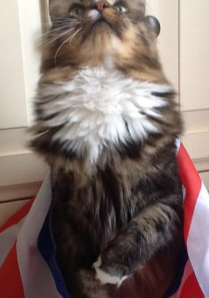 Amanda Eaves took this picture of her cat Dusty in Chigwell Essex whilst watching the TV coverage of trooping the colour. Credit: Amanda Eaves