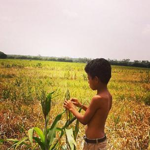 Un niño observa y toca trigo en un campo en Nicaragua