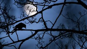 A crow on a branch with the Moon behind him