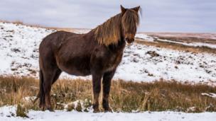 Pony in Upper Brynamman, Black Mountains, taken by Steve J Huggett