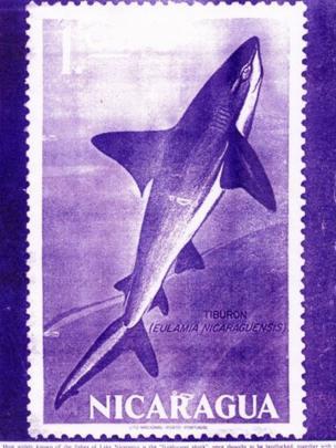 La estampilla que el gobierno nicaragüense hizo en honor al tiburón.