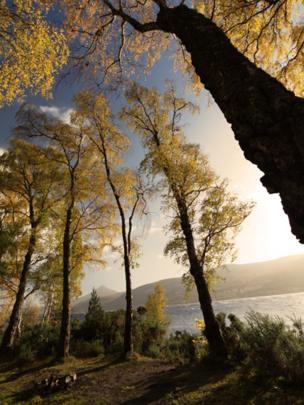Trees by Loch Rannoch