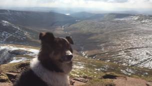 Meg the dog on Pen Y Fan