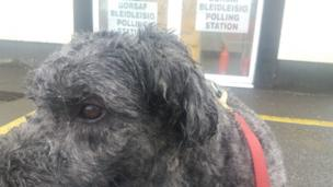 Tiggy at a polling station